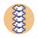 backbone, bone, bones, spine icon