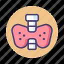 neck, organ, thyroid icon