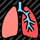 anatomy, breath, lungs, pulmonology icon