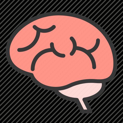 anatomy, brain, hospital, internal organ, medical, organ icon