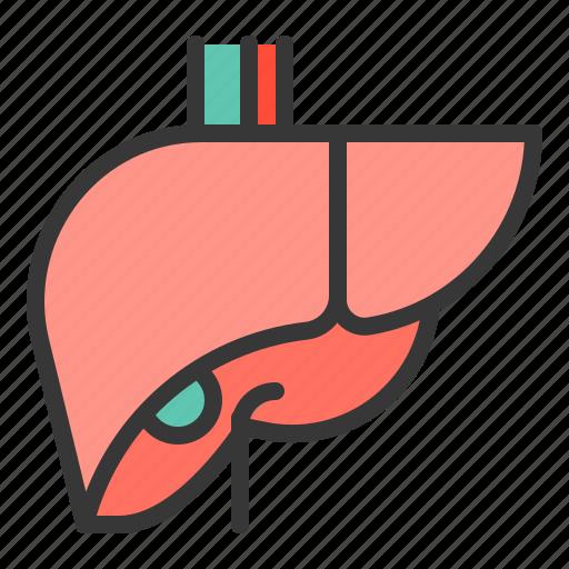 anatomy, hospital, internal organ, liver, medical, organ icon