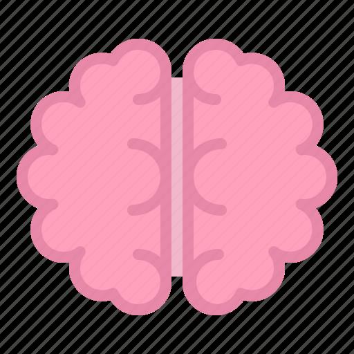 anatomy, brain, healthcare, hospital, internal organ, medical, organ icon