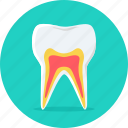 gum, tooth, dental, hygiene, repair, teeth, dentist