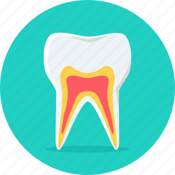 dental, dentist, gum, hygiene, repair, teeth, tooth icon