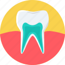 teeth, tooth, healthy, strong, dental care, gum care, medical