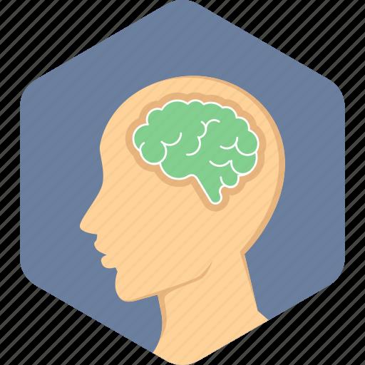 brain, head, human icon
