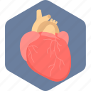 anatomy, body organ, heart, heart attack, human heart, organ icon