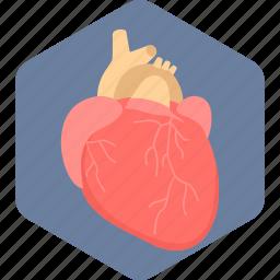 anatomy, body organ, heart, heart attack, human heart, organ icon