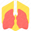 anatomy, body, human body part, lungs, medical, organ icon