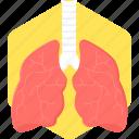 lungs, anatomy, body, organ, human body part, medical icon