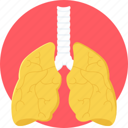 anatomy, body, lung, lung cancer, lungs, organ icon