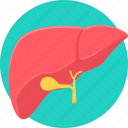 anatomy, bodypart, liver, organ, part icon