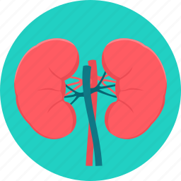 anatomy, kidney, kidneys, medical, organ icon