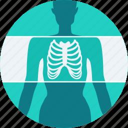 bones, examination, mri, radiology, skeleton, x-ray, xray icon