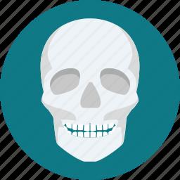 bone, bones, facebone, ray, scalp, skeleton, skull icon