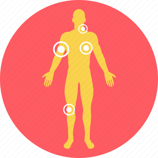 anatomy, bodyparts, human, human body, joints, nervous system, parts icon