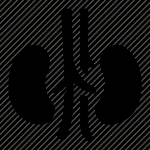 Health, human, internal, kidneys, medical, organ, ureter icon - Download on Iconfinder