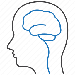 brain, neurology, neurons icon