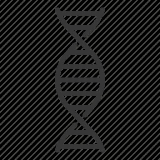 chromosome, dna, hospital, medical, rna icon