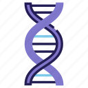 biology, chromosome, dna, genetic, molecule, research, spiral icon