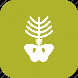 bone, halloween, skeleton, skull, xray icon