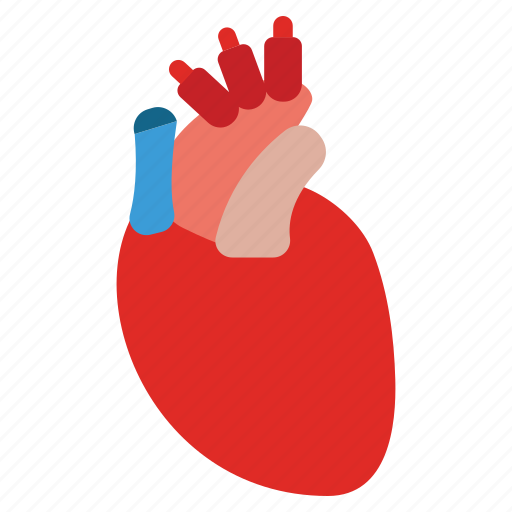 anatomy, body, cardio, heart, medicine, organ, structure icon