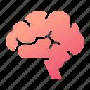 brain, intelligence, medicalinternal, mind, neurology, organ, think