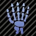anatomy, bone, finger, hand, joint, medical, skeleton icon