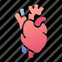 heart, organ, cardiology, medical, health, cardiac, vein