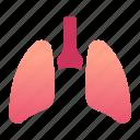 body, health, human, internal, lung, medical, organ icon