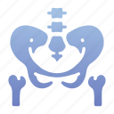bone, health, human, medicaljointanatomy, ray, waist, x icon