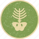 bone, skeleton, x ray icon