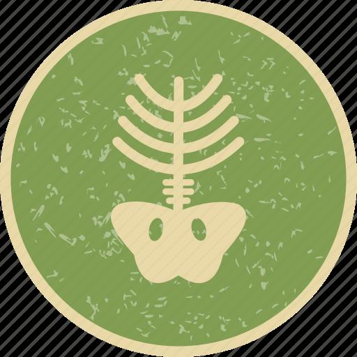 bone, skeleton, x ray icon