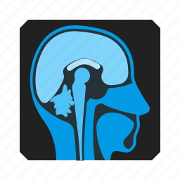 brain, head, mri, scan, snap icon