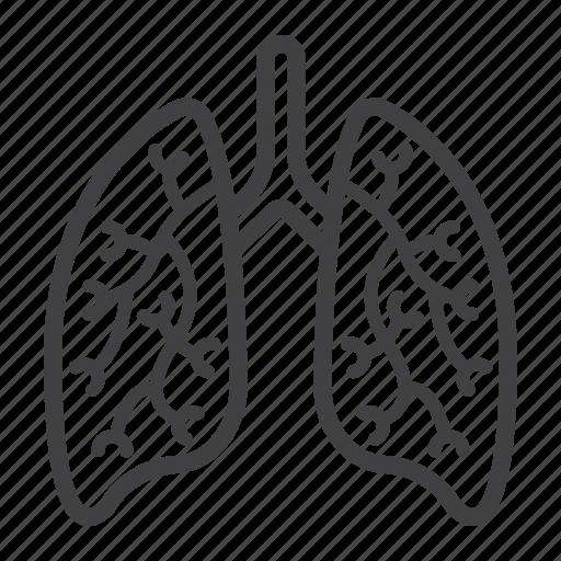 Anatomy, healthcare, human, lungs, medicine, organ, pulmonary icon - Download on Iconfinder