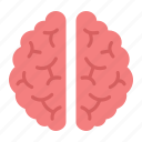 anatomy, brain, healthcare, human, idea, medicine, organ icon