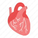 anatomy, cardiology, healthcare, heart, human, medicine, organ icon