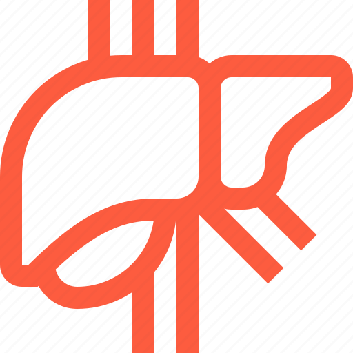 anatomy, body, gland, human, liver, medical, organ icon