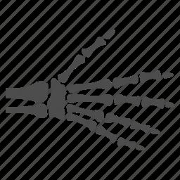 anatomy, fingers, hand, palm, radiology, skeleton, xray icon