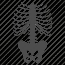 anatomy, fluorography, human body, radiology, radioscopy, skeleton spine, xrays icon