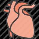 cardio, cardiology, heart