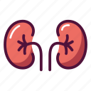 anatomy, excretory system, health, healthcare, kidney, organ, urine icon