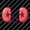 anatomy, kidney, organ, urine, excretory system, health, healthcare