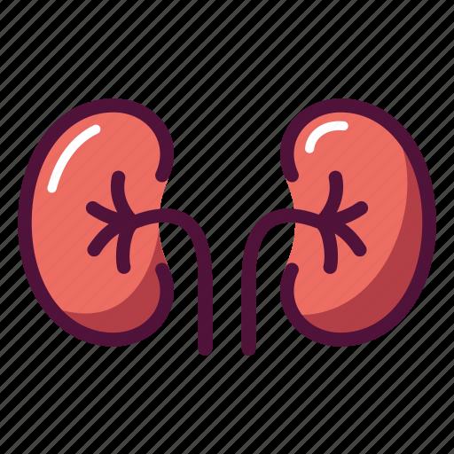 anatomy, excretory system, health, healthcare, kidney, organ, urine icon