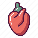anatomy, body, heart, muscle, blood system, cardiology, organ