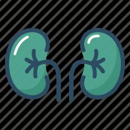 anatomy, biology, excretory system, kidney, medical, organ, urine icon