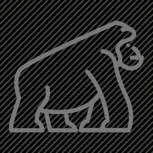 Ape, gorilla, mammal, monkey, zoo icon - Download on Iconfinder