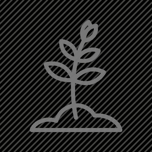 bud, garden, grow, plant, seedling, soil icon