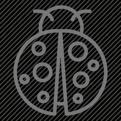 bug, fly, insect, ladybug, wings icon