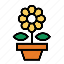 flower, flower pot, plant, sunflower icon